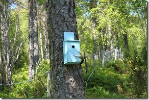 Stilig fuglekasse med horn som sittepinne