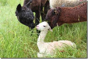 Bare minutter etter fødselen