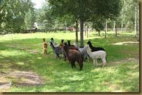 I august kom alle dyrene fra Chile!