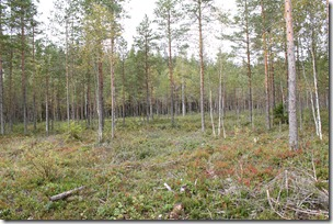 Del av skogen vår