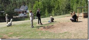 Alpaca Society fotoseanse forberedelser